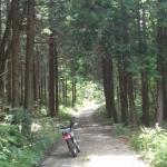 芸北界隈の林道探索②