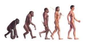 類人猿から人間